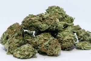 Isracann Biosciences to focus on meeting cannabis demand in the EU